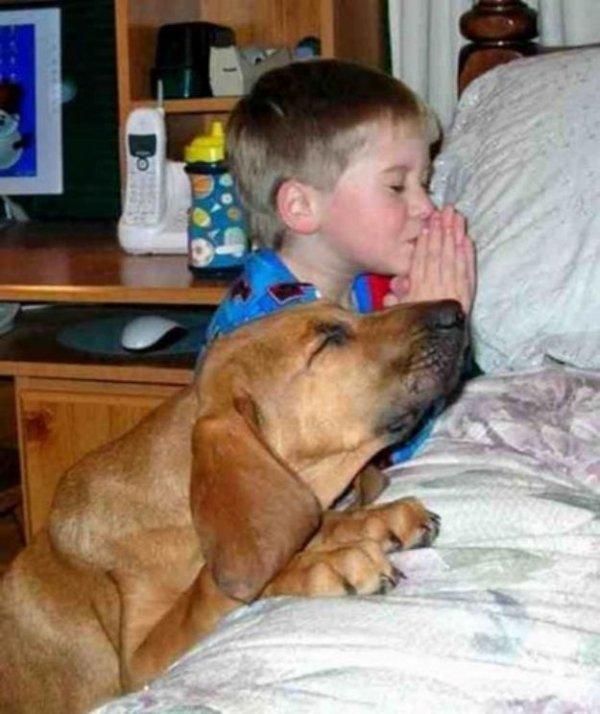 Praying Pooch