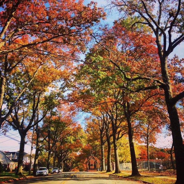 tree, nature, autumn, leaf, woody plant,