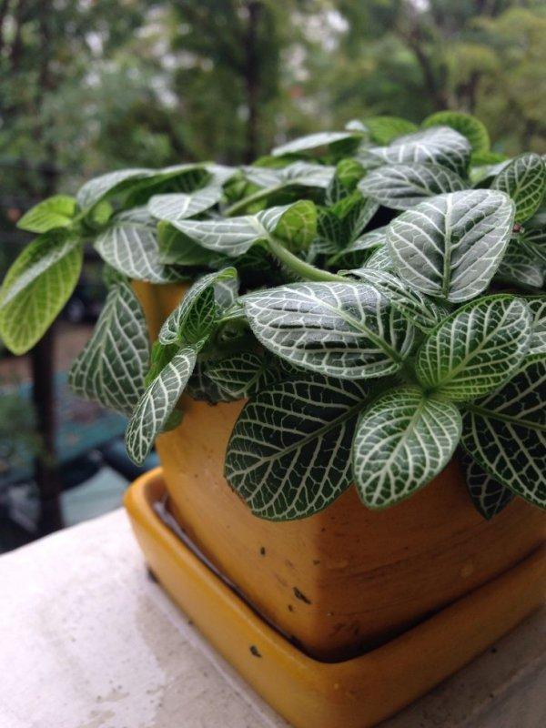 Nerve Plant