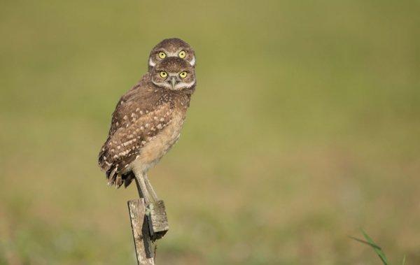 bird, vertebrate, beak, bird of prey, wildlife,
