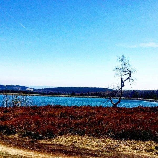 sky, loch, shore, lake, tree,