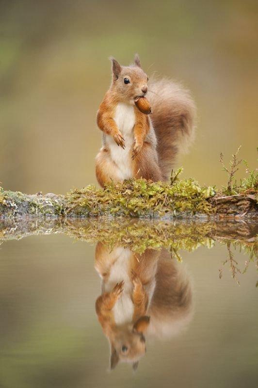 The Deceptive Squirrels