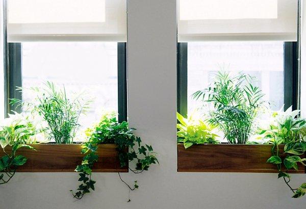 wall,floristry,window,interior design,home,