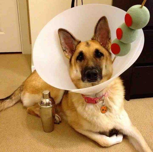 Halloween Dog-tail
