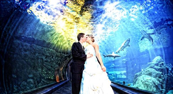 At an Aquarium