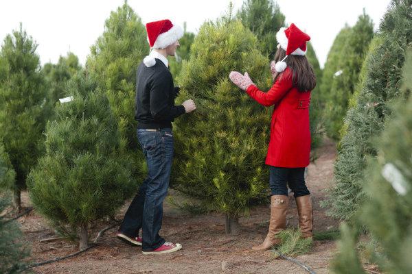 A Christmas Wedding Date.8 Charming Ideas For A Christmas Wedding
