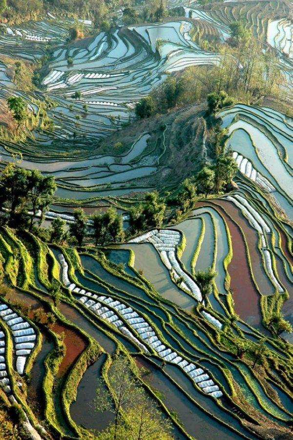 Rice Terraces, Yuanyang, China