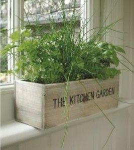 property,plant,bamboo,balcony,wood,