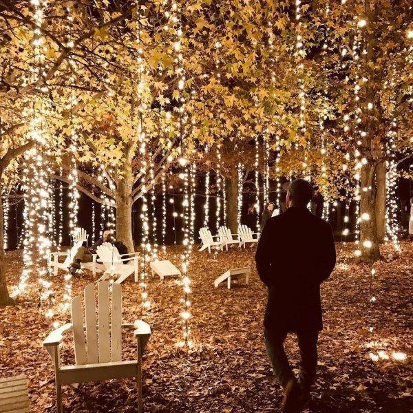 nature, tree, woody plant, autumn, woodland,
