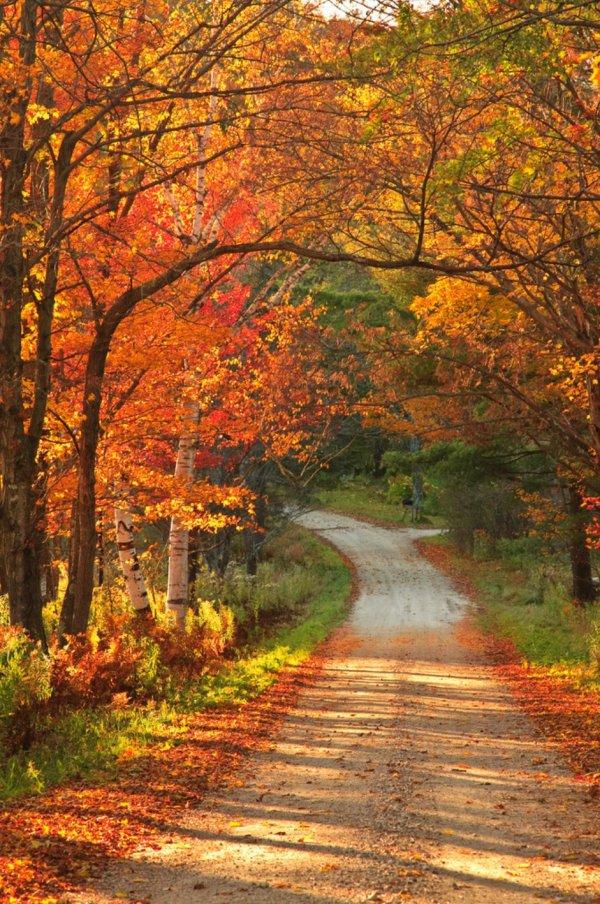 nature, autumn, leaf, path, woodland,