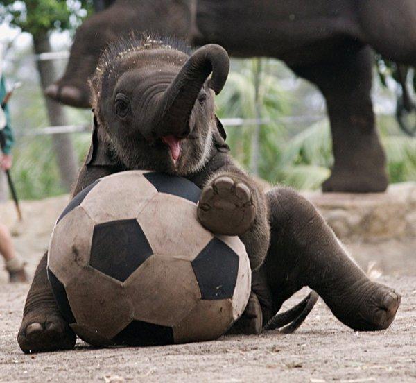 mammal,vertebrate,wildlife,zoo,elephant,