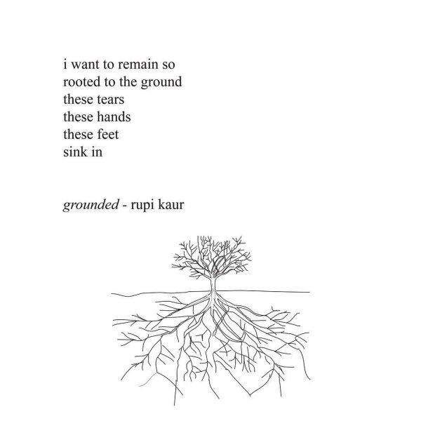 White pine, Text, Botany, Line, Plant,