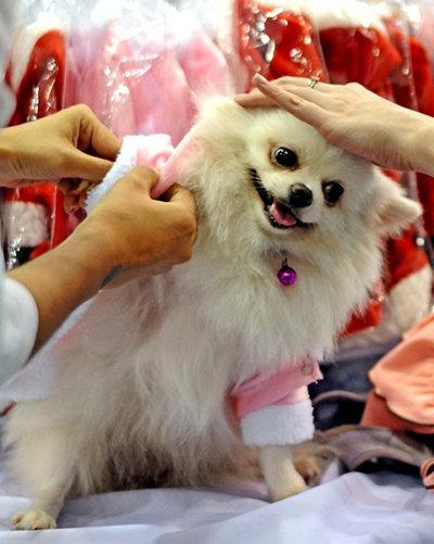 Dressing Pup...