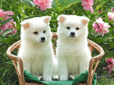 Happy Huskies...