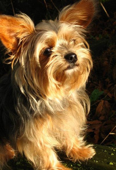Little Roxy...