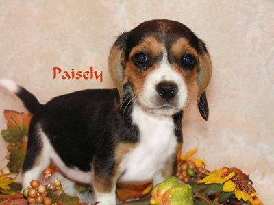 Precious Paisley...