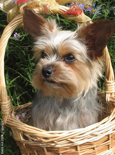 Puppy in a Basket...