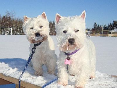 Snow Pups...
