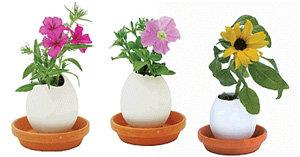 Eggling Crack & Grow Flowers