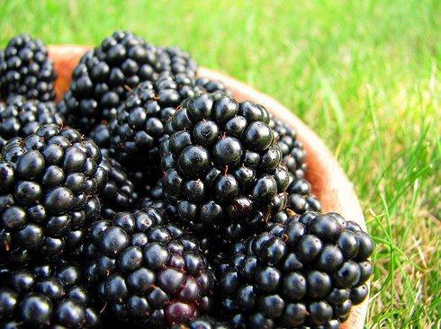 Blackberry Clafouti