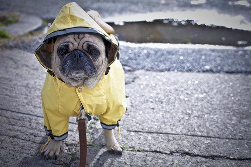 Pet Raincoat