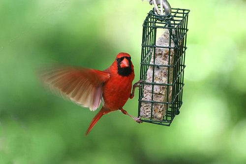 Keep a Bird Feeder