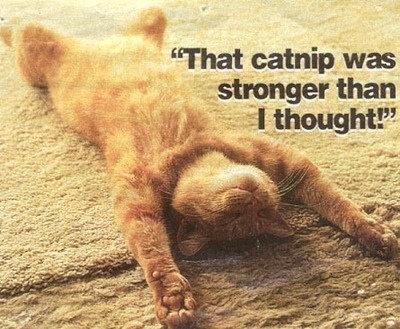 So I do a Little Catnip …