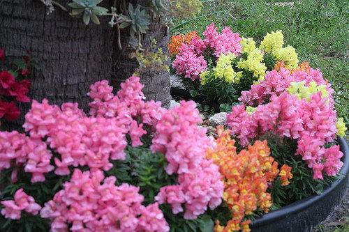 Your Flower Garden