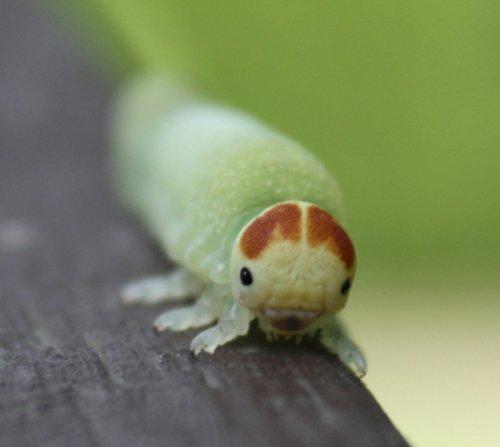 Cat-a-Bug