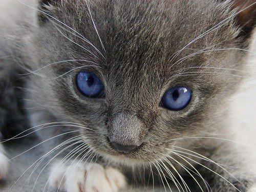 Watching Kittens or Kids Play