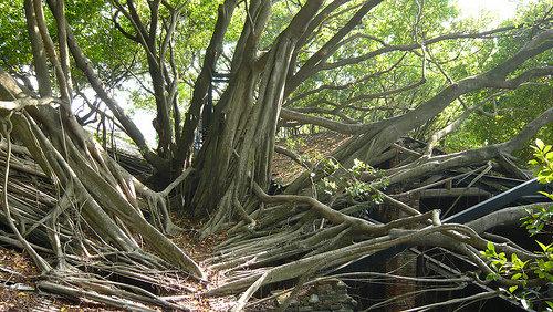 Green Magic Tree Houses in India