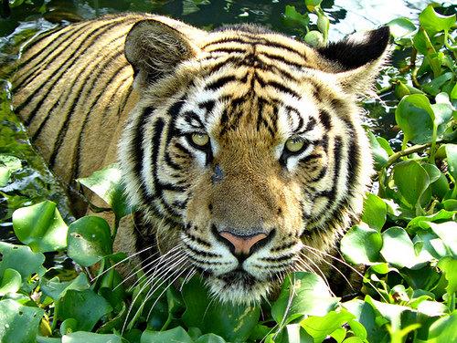 Save Wildlife!