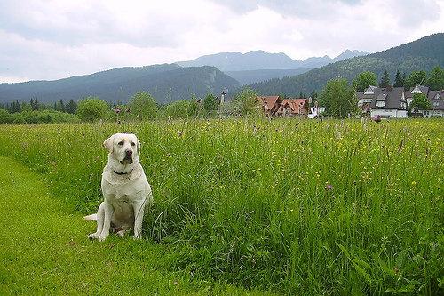 Locate Pet-friendly Campsites along the Route