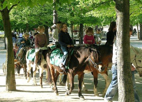 Horse or Pony Riding
