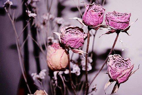 Get Rid of Dead Flowers