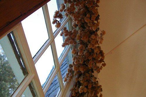 Flowers over My Window