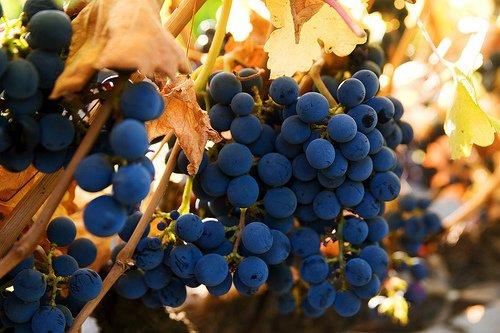 Grapes for Radiant Skin