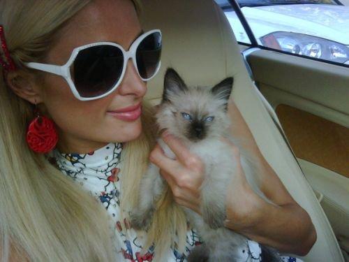 Princess Annabell: Paris Hilton