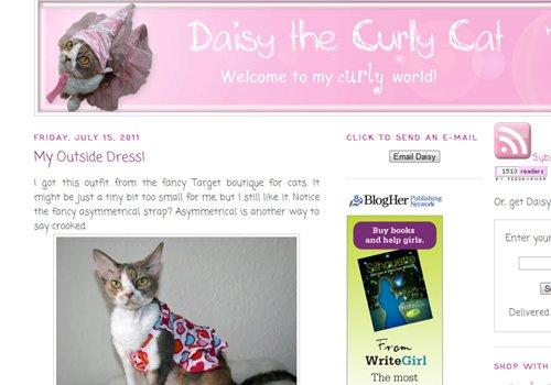 Daisy the Curly Cat