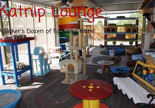 Katnip Lounge