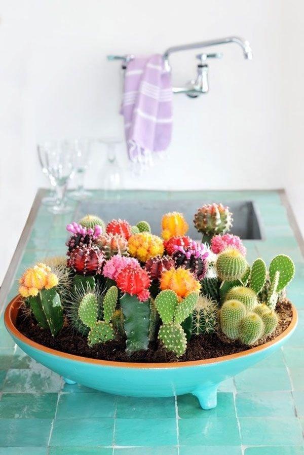flower arranging,plant,flower,floristry,cactus,