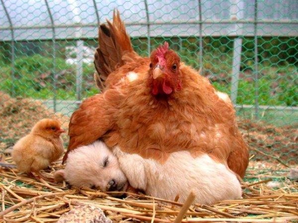 Sleep Tight, Weird Chick. I'll Keep You Warm