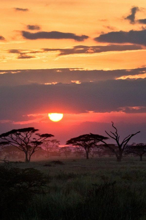 The Serengeti, Africa