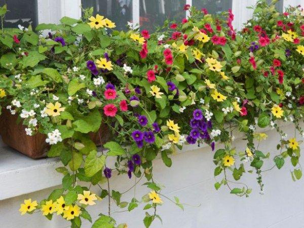 Use Trailing Plants outside
