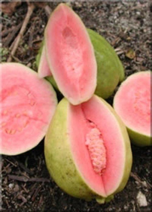 plant,food,fruit,produce,melon,
