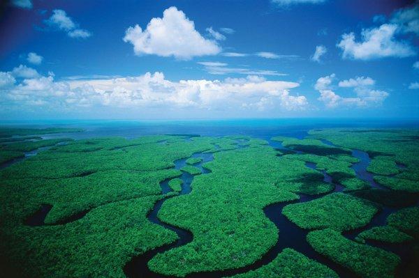 Spot a Manatee at Everglades National Park