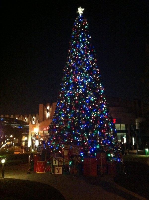 The Christmas Tree Lighting