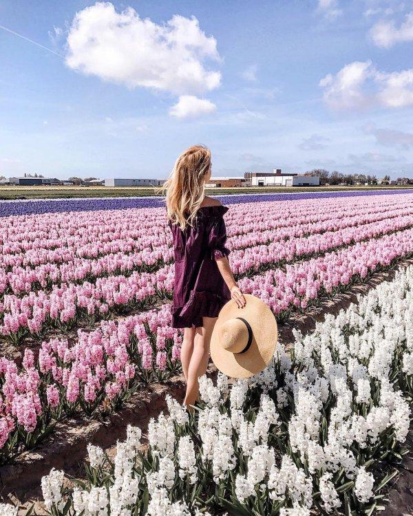 flower, plant, field, lavender, land plant,