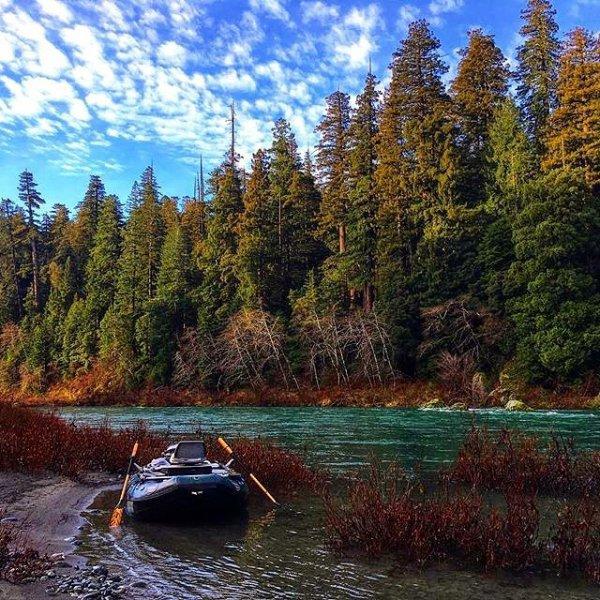 nature, wilderness, ecosystem, water, tree,