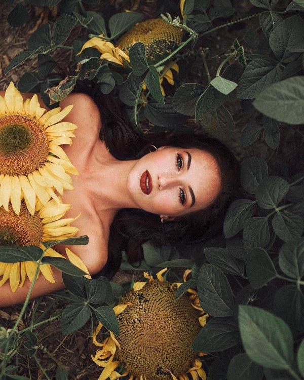 sunflower, flower, yellow, leaf, flora,